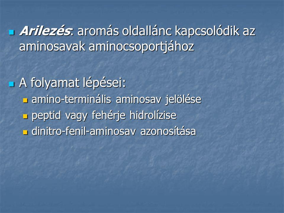Arilezés: aromás oldallánc kapcsolódik az aminosavak aminocsoportjához Arilezés: aromás oldallánc kapcsolódik az aminosavak aminocsoportjához A folyam
