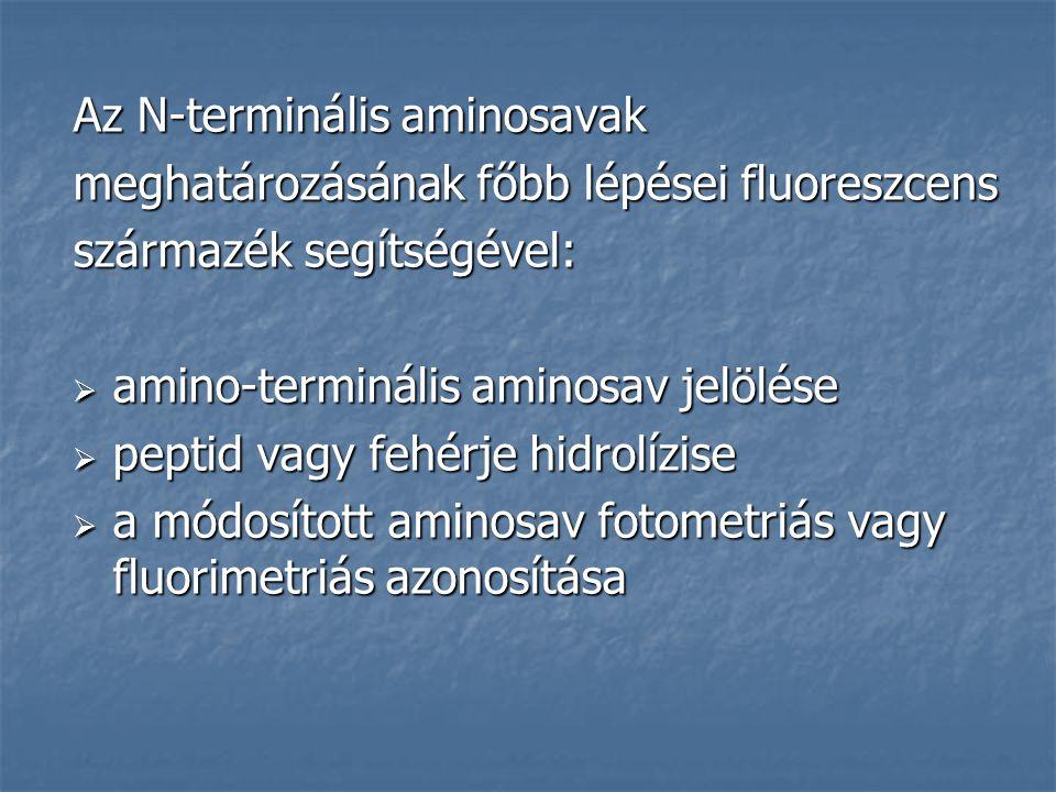 Az N-terminális aminosavak meghatározásának főbb lépései fluoreszcens származék segítségével:  amino-terminális aminosav jelölése  peptid vagy fehér