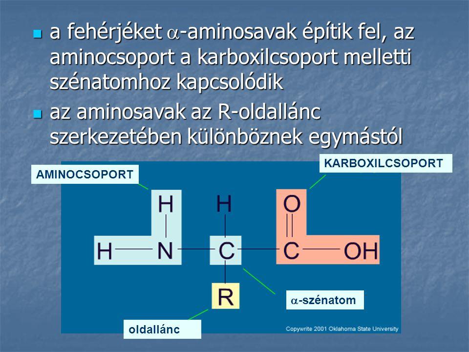 a fehérjéket  -aminosavak építik fel, az aminocsoport a karboxilcsoport melletti szénatomhoz kapcsolódik a fehérjéket  -aminosavak építik fel, az am