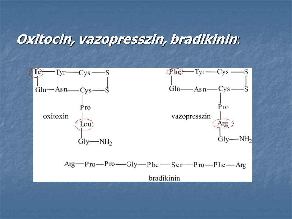 Oxitocin, vazopresszin, bradikinin: