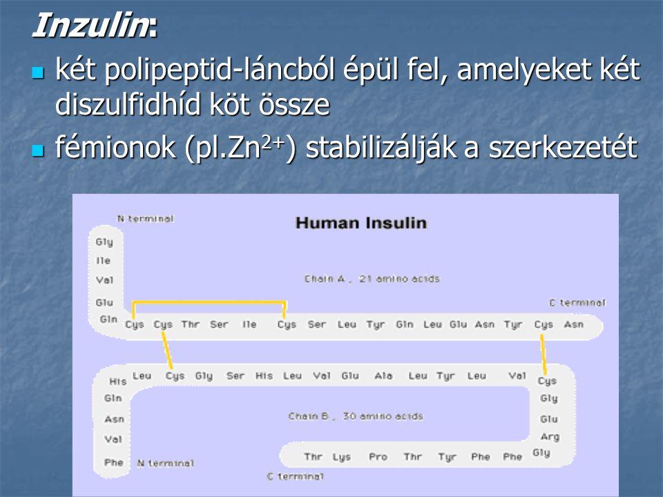 Inzulin: két polipeptid-láncból épül fel, amelyeket két diszulfidhíd köt össze két polipeptid-láncból épül fel, amelyeket két diszulfidhíd köt össze f