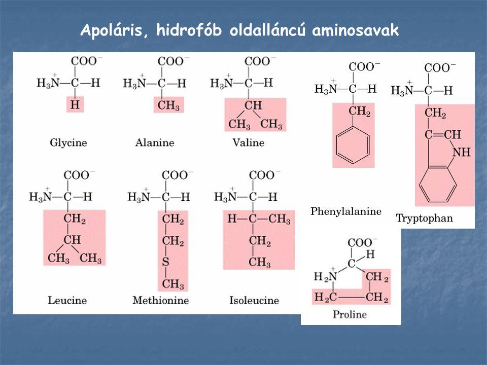 A glicinben található hidrogénatom nem befolyásolja lényegesen a molekula töltéseloszlását, ezért az apoláris oldalláncú aminosavak közé is besorolható.