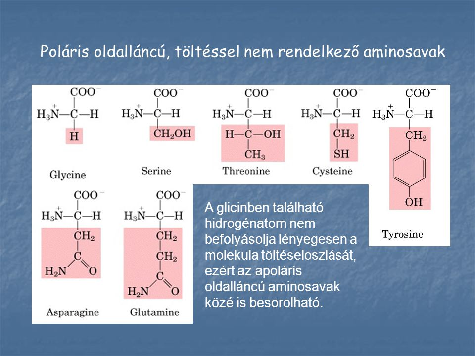 Savas oldalláncú, negatív töltésű aminosavak Savas oldalláncú, negatív töltésű aminosavak Bázikus oldalláncú, pozitív töltésű aminosavak