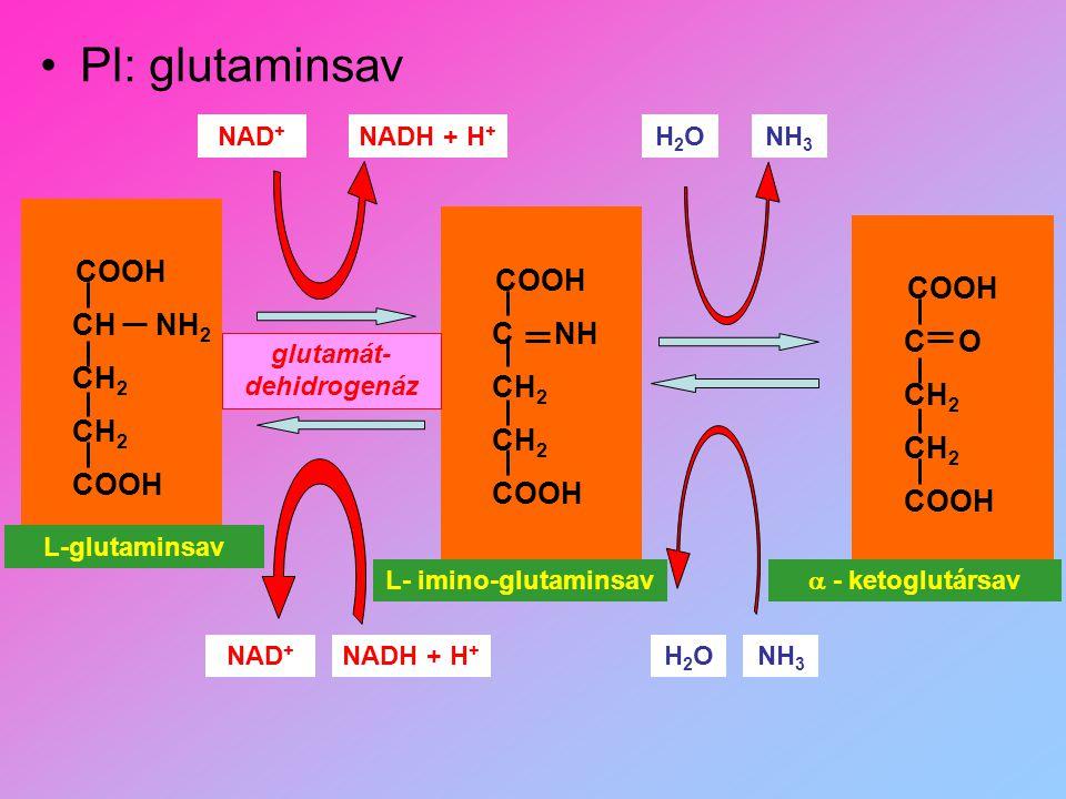 Pl: glutaminsav COOH CH NH 2 CH 2 COOH L-glutaminsav COOH C NH CH 2 COOH C O CH 2 COOH L- imino-glutaminsav  - ketoglutársav glutamát- dehidrogenáz N