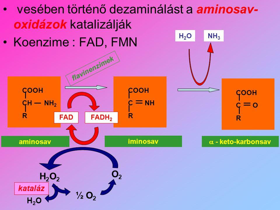 vesében történő dezaminálást a aminosav- oxidázok katalizálják Koenzime : FAD, FMN aminosav iminosav  - keto-karbonsav H2OH2ONH 3 COOH CH NH 2 R COOH