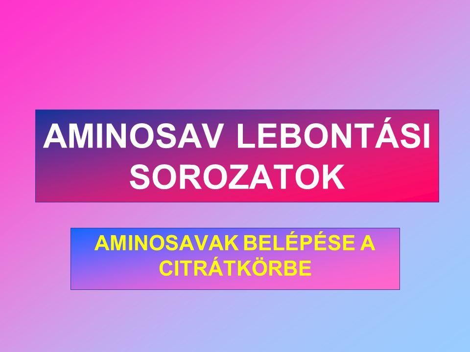 AMINOSAV LEBONTÁSI SOROZATOK AMINOSAVAK BELÉPÉSE A CITRÁTKÖRBE