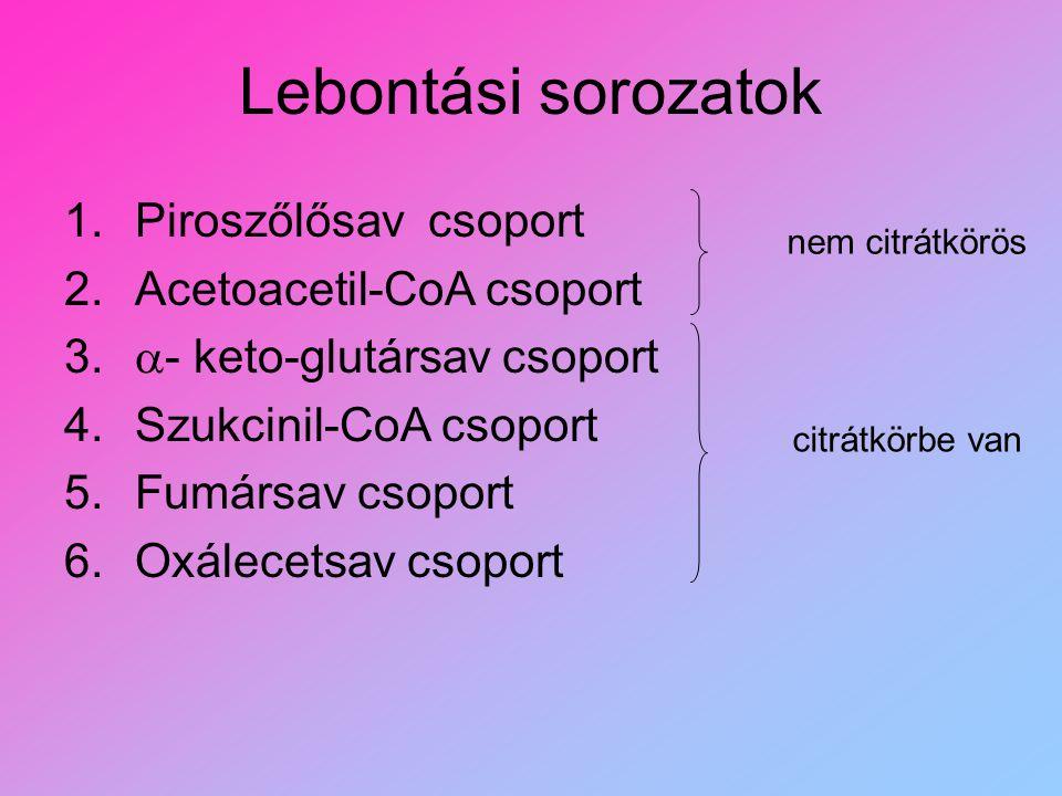 Lebontási sorozatok 1.Piroszőlősav csoport 2.Acetoacetil-CoA csoport 3.  - keto-glutársav csoport 4.Szukcinil-CoA csoport 5.Fumársav csoport 6.Oxálec
