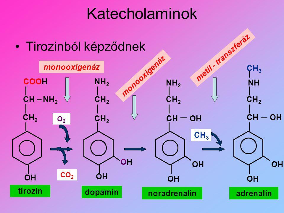 Katecholaminok Tirozinból képződnek OH OHOH CH 2 CH COOH NH 2 CH 2 NH 2 CHOH NH CH 3 CH 2 OHCH tirozin dopamin noradrenalinadrenalin CO 2 O2O2 monooxi