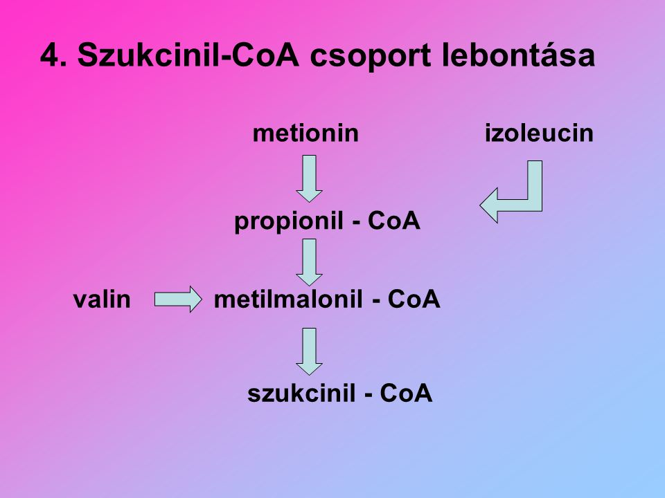 4. Szukcinil-CoA csoport lebontása metionin propionil - CoA metilmalonil - CoAvalin szukcinil - CoA izoleucin