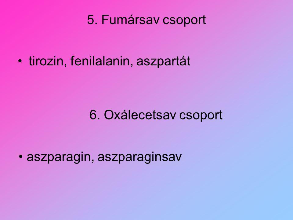 5. Fumársav csoport tirozin, fenilalanin, aszpartát 6. Oxálecetsav csoport aszparagin, aszparaginsav