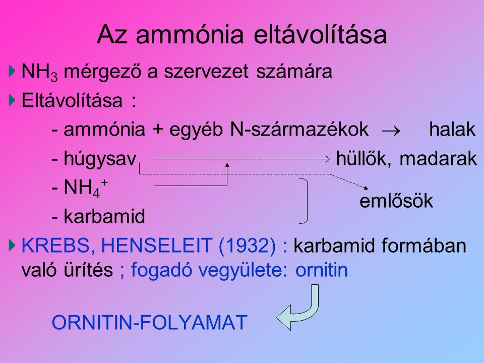 Az ammónia eltávolítása NH 3 mérgező a szervezet számára Eltávolítása : - ammónia + egyéb N-származékok  halak - húgysav hüllők, madarak - NH 4 + - k