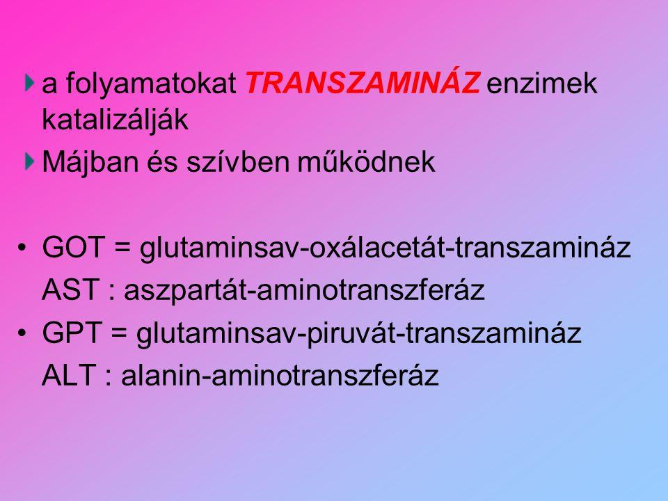 a folyamatokat TRANSZAMINÁZ enzimek katalizálják Májban és szívben működnek GOT = glutaminsav-oxálacetát-transzamináz AST : aszpartát-aminotranszferáz