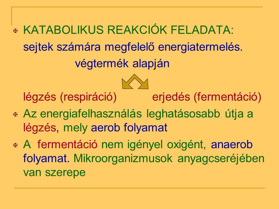  KATABOLIKUS REAKCIÓK FELADATA: sejtek számára megfelelő energiatermelés. végtermék alapján légzés (respiráció)erjedés (fermentáció)  Az energiafelh