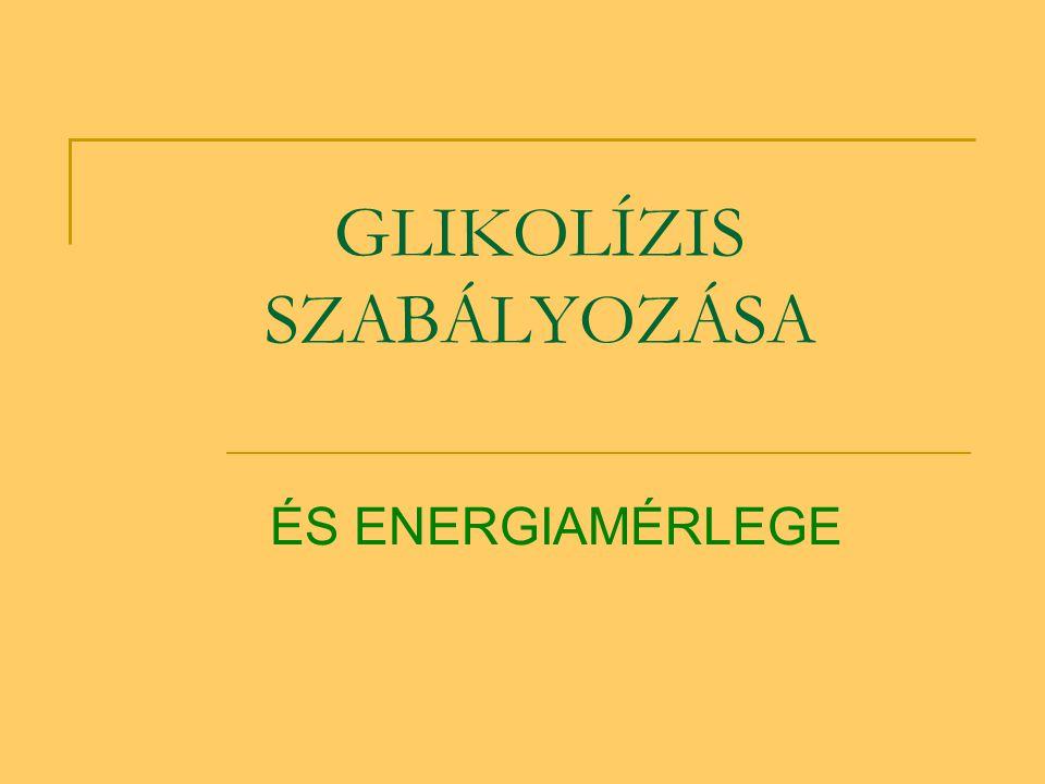 GLIKOLÍZIS SZABÁLYOZÁSA ÉS ENERGIAMÉRLEGE