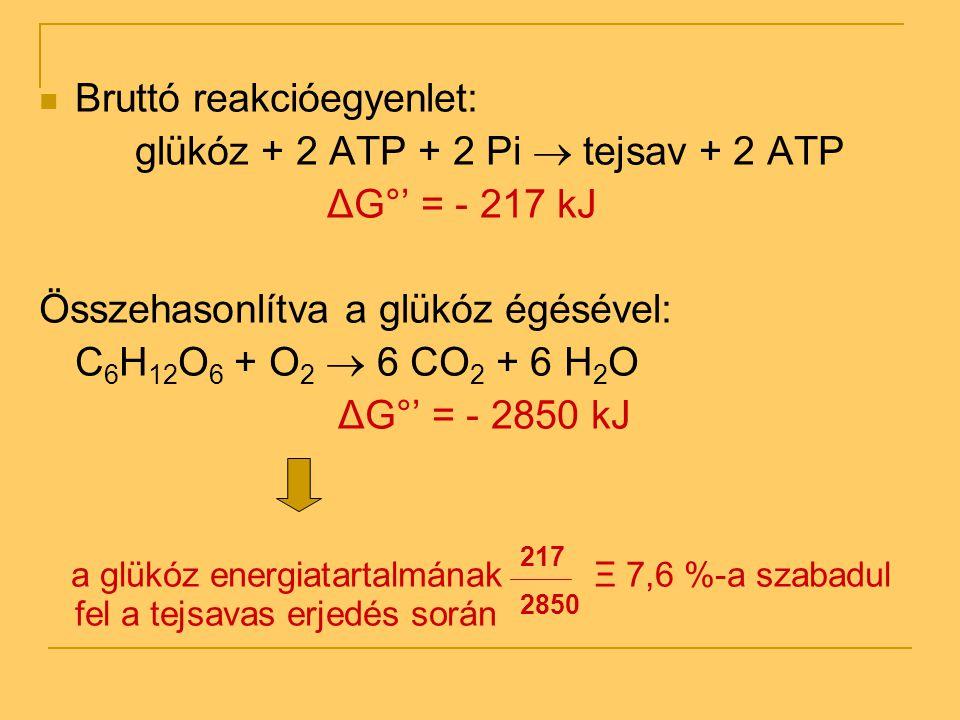 Bruttó reakcióegyenlet: glükóz + 2 ATP + 2 Pi  tejsav + 2 ATP ΔG°' = - 217 kJ Összehasonlítva a glükóz égésével: C 6 H 12 O 6 + O 2  6 CO 2 + 6 H 2