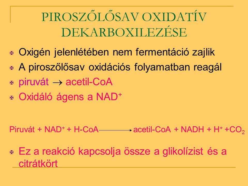 PIROSZŐLŐSAV OXIDATÍV DEKARBOXILEZÉSE  Oxigén jelenlétében nem fermentáció zajlik  A piroszőlősav oxidációs folyamatban reagál  piruvát  acetil-Co
