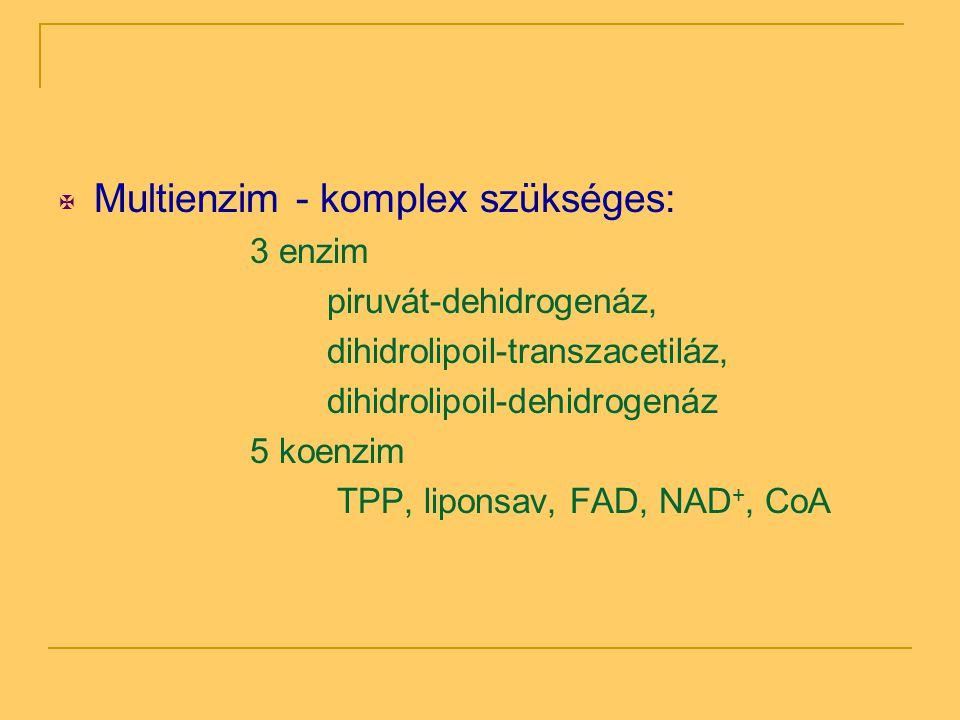  Multienzim - komplex szükséges: 3 enzim piruvát-dehidrogenáz, dihidrolipoil-transzacetiláz, dihidrolipoil-dehidrogenáz 5 koenzim TPP, liponsav, FAD,