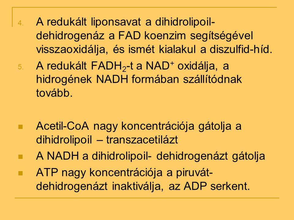 4. A redukált liponsavat a dihidrolipoil- dehidrogenáz a FAD koenzim segítségével visszaoxidálja, és ismét kialakul a diszulfid-híd. 5. A redukált FAD