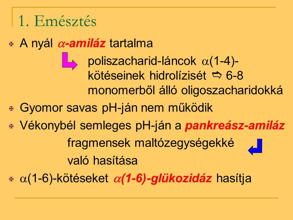 1. Emésztés  A nyál  -amiláz tartalma poliszacharid-láncok  (1-4)- kötéseinek hidrolízisét  6-8 monomerből álló oligoszacharidokká  Gyomor savas