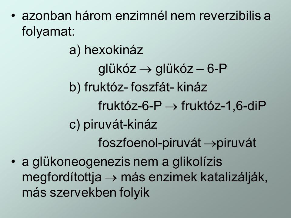azonban három enzimnél nem reverzibilis a folyamat: a) hexokináz glükóz  glükóz – 6-P b) fruktóz- foszfát- kináz fruktóz-6-P  fruktóz-1,6-diP c) pir