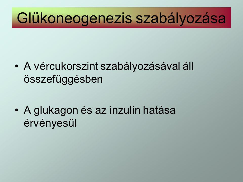 Glükoneogenezis szabályozása A vércukorszint szabályozásával áll összefüggésben A glukagon és az inzulin hatása érvényesül