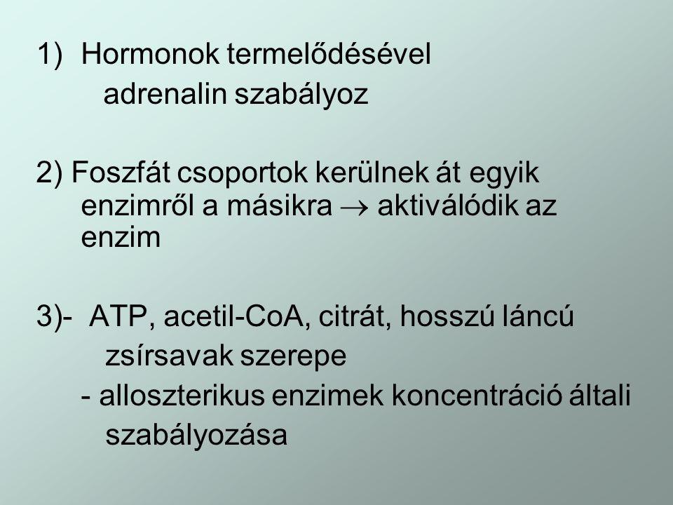 1)Hormonok termelődésével adrenalin szabályoz 2) Foszfát csoportok kerülnek át egyik enzimről a másikra  aktiválódik az enzim 3)- ATP, acetil-CoA, ci