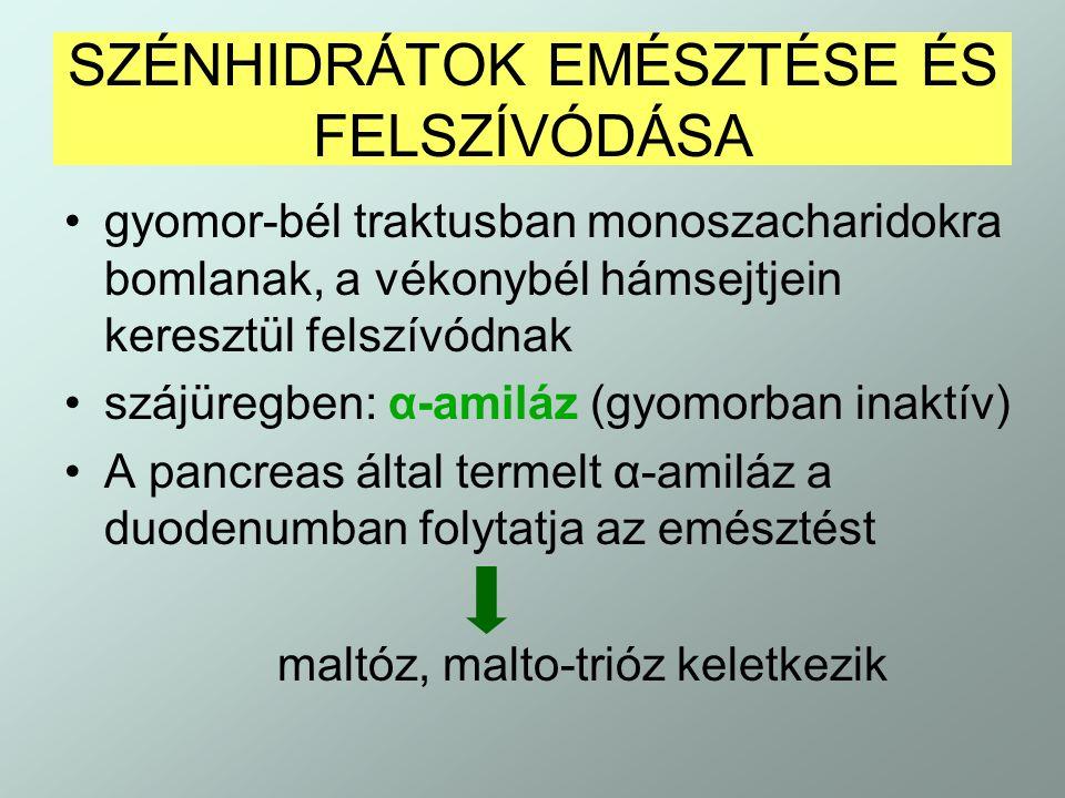 SZÉNHIDRÁTOK EMÉSZTÉSE ÉS FELSZÍVÓDÁSA gyomor-bél traktusban monoszacharidokra bomlanak, a vékonybél hámsejtjein keresztül felszívódnak szájüregben: α