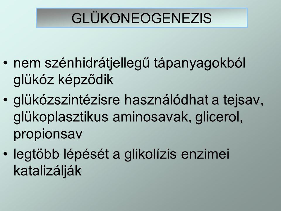 azonban három enzimnél nem reverzibilis a folyamat: a) hexokináz glükóz  glükóz – 6-P b) fruktóz- foszfát- kináz fruktóz-6-P  fruktóz-1,6-diP c) piruvát-kináz foszfoenol-piruvát  piruvát a glükoneogenezis nem a glikolízis megfordítottja  más enzimek katalizálják, más szervekben folyik