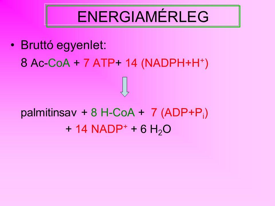 LÁNCHOSSZABBÍTÁS (elongáció) MITOKONDRIUM C 16 + Ac-CoA  -oxidáció fordítottjaként, különálló enzimekkel hordozó: CoA redukáló ágensek: 1.redukció: NADH + H + 2.redukció: NADPH + H + ENDOPLAZMÁS RETIKULUM C 16 + malonil-CoA 'DE NOVO' szintézishez hasonlóan, különálló enzimekkel hordozó: CoA redukáló erő: 2.