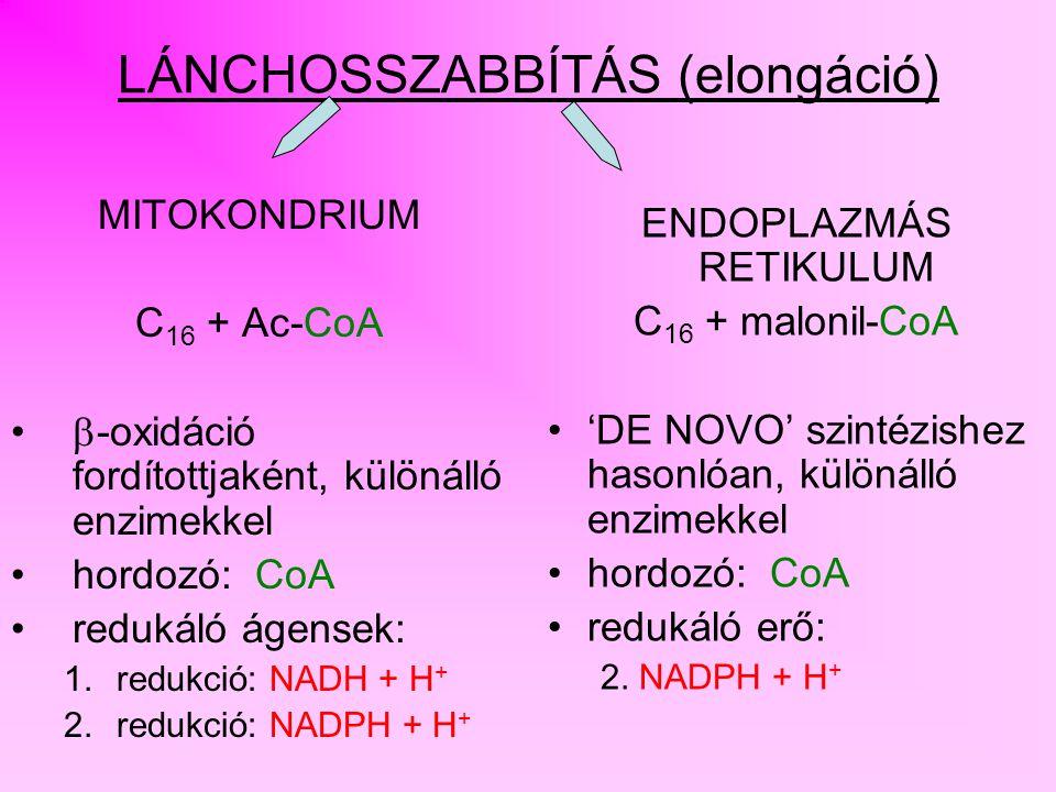 SZABÁLYOZÁS MITOKONDRIUMCITOSZOL CITRÁT OXÁLECETSAV IZOCITRÁT  - KETO GLUTARÁT OXÁLECETSAV ACETIL-CoA ATP ADP + Pi ACETIL-CoA ATP CITRÁT LIÁZ
