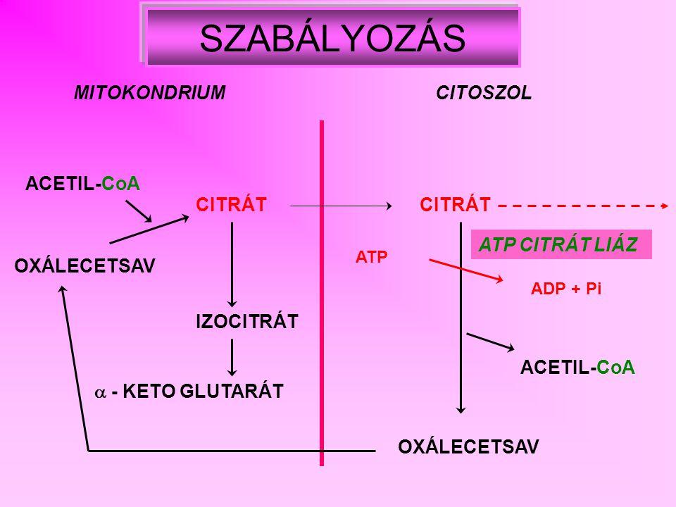 CITRÁT (inaktív) ACETIL-KARBOXILÁZ (monomerek) (aktív) ACETIL-KARBOXILÁZ (polimer) aktivál gátol MALONIL – CoA PALMITOIL - CoA PROTEIN KINÁZ foszforiláció GLUKAGON aktiválgátol INZULIN