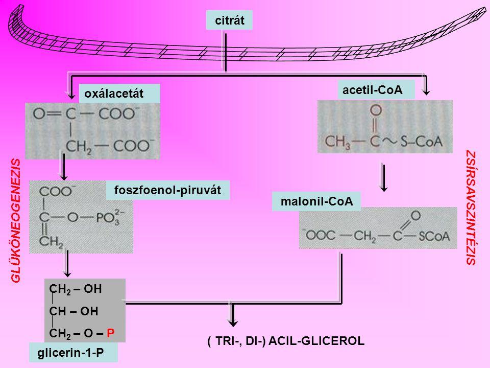 TRIGLICERIDEK SZINTÉZISE Dihidroxiaceton- foszfát Glicerin-1-foszfát