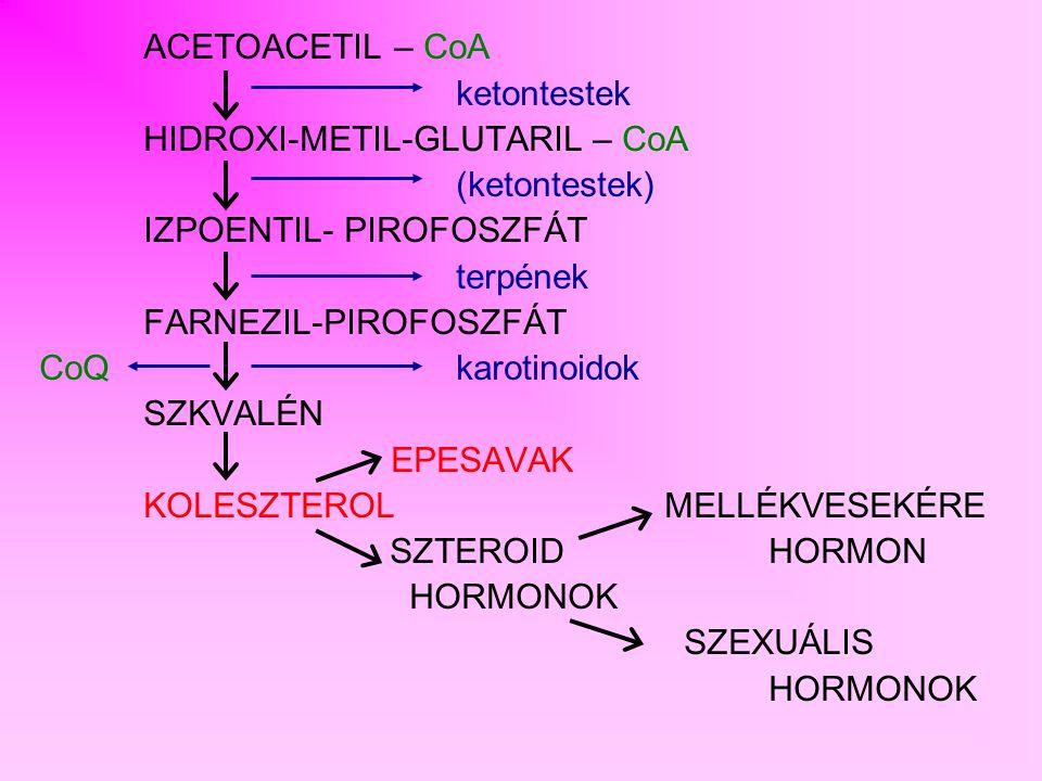 ZSÍRSAVAK SZINTÉZISE LEBONTÁSSZINTÉZIS HELYE mitokondrium -Citoszol C 16 -ig -C 16 -tól részben mitokondrium, részben mikroszómák ENZIMEK egymástól függetlenek multifunkciós enzimkomplex ÁTVIVŐH-CoA ACP (acil-carrier protein), savtartó fehérje REAKTÁNS INTERMEDIEREK Acetil - CoAMalonil - CoA OXIDO-REDUKTÁZ KOENZIMEK NAD + FADNADPH + H + SZTEREOIZOMÉRIAL-izomerD-izomer