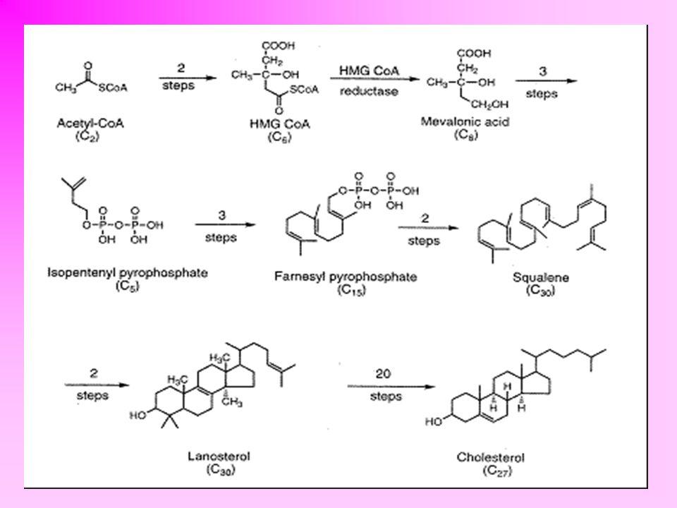 KOLESZTERIN molekulájában két metilcsoport (C-10; C-13), alifás oldallánc (C-17), és hidroxilcsoport (C-3) található B/C és C/D gyűrűk kapcsolódása transz az A/B gyűrűk is szalagszerűen helyezkednek el a gyűrűrendszer felső részéhez kapcsolódó szubsztituensek β-helyzetűek, az alsó részéhez kapcsolódók  -helyzetűek