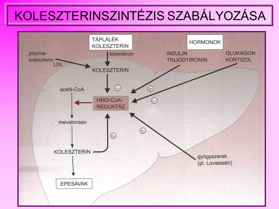 Lipoproteinek osztályozása jellemzői LIPOPROTEIN SŰRŰSÉG (g/ml) ÁTLAG- ÁTMÉRŐ (nm) FORRÁSFŐ FUNKCIÓ CM (kilomikron) < 0,95500bél exogén trigliceridek szállítása VLDL0, 96- 1,00643máj endogén trigliceridek szállítása IDL 1,007 - 1,019 27VLDL katabolizmusLDL prekurzora LDL1,02 - 1,06322 VLDL katabolizmus az IDL-en keresztül koleszterin transzporrt HDL1,064 - 1,48 máj, bél, a CN és VLDL katabolizmus reverz koleszterin transzport
