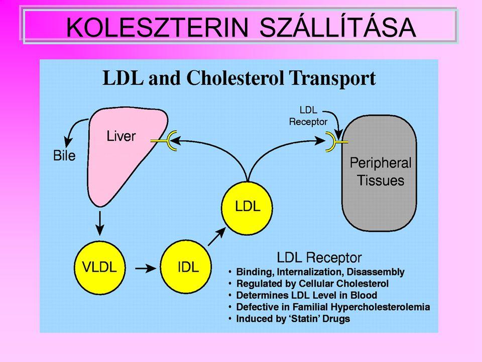 Lipideredmények interpretálása PLAZMAKONCENTRÁCIÓ (MMOL/L) IDEÁLISHATÁRESETKÓROS összkoleszterin< 5,25,2 - 6,5> 6,5 LDL koleszterin< 44 - 5> 5 HDL koleszterin> 10,9 - 1< 0,9 HDL/ összkol.