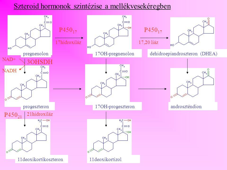11deoxikortikoszteron11deoxikortizol kortikoszteronkortizol aldoszteron P450 11 11hidroxiláz P450 18 18hidroxiláz/ dehidrogenáz