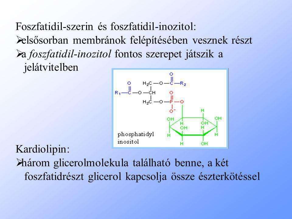 Foszfatidil-szerin és foszfatidil-inozitol:  elsősorban membránok felépítésében vesznek részt  a foszfatidil-inozitol fontos szerepet játszik a jelátvitelben Kardiolipin:  három glicerolmolekula található benne, a két foszfatidrészt glicerol kapcsolja össze észterkötéssel