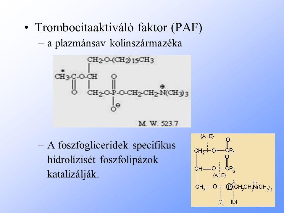 Trombocitaaktiváló faktor (PAF) –a plazmánsav kolinszármazéka –A foszfogliceridek specifikus hidrolízisét foszfolipázok katalizálják.
