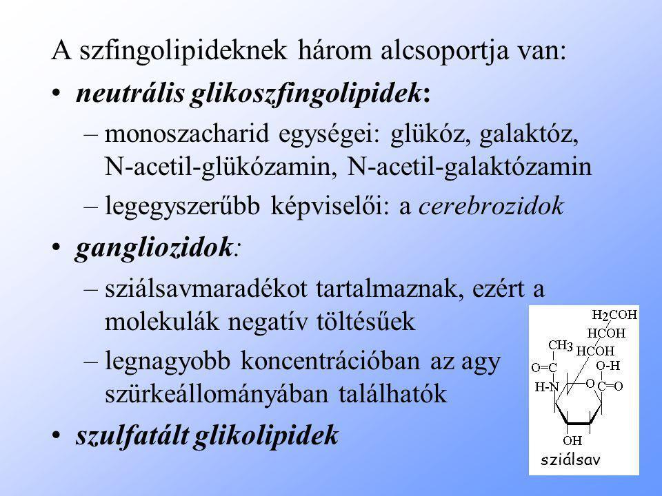 A szfingolipideknek három alcsoportja van: neutrális glikoszfingolipidek: –monoszacharid egységei: glükóz, galaktóz, N-acetil-glükózamin, N-acetil-galaktózamin –legegyszerűbb képviselői: a cerebrozidok gangliozidok: –sziálsavmaradékot tartalmaznak, ezért a molekulák negatív töltésűek –legnagyobb koncentrációban az agy szürkeállományában találhatók szulfatált glikolipidek sziálsav