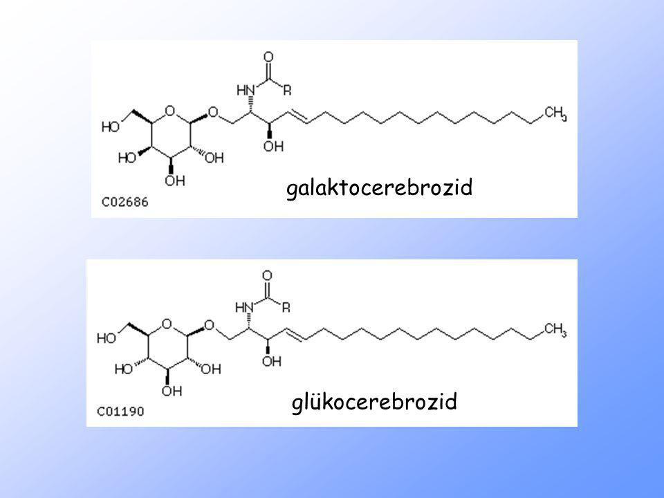 glükocerebrozid galaktocerebrozid