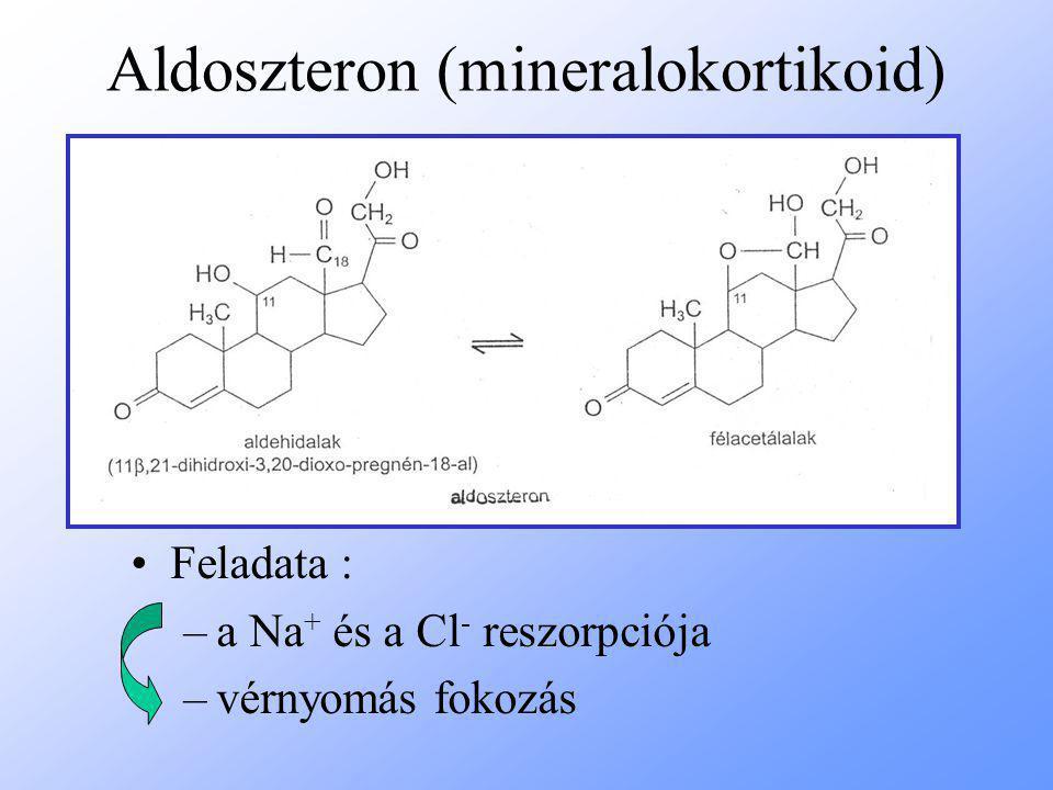 Aldoszteron (mineralokortikoid) Feladata : –a Na + és a Cl - reszorpciója –vérnyomás fokozás