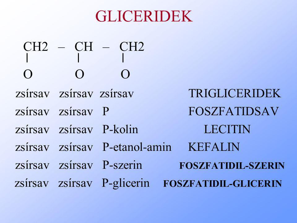 GLICERIDEK CH2 – CH – CH2 O O O zsírsav zsírsav zsírsav TRIGLICERIDEK zsírsav zsírsav P FOSZFATIDSAV zsírsav zsírsav P-kolin LECITIN zsírsav zsírsav P-etanol-amin KEFALIN zsírsav zsírsav P-szerin FOSZFATIDIL-SZERIN zsírsav zsírsav P-glicerin FOSZFATIDIL-GLICERIN