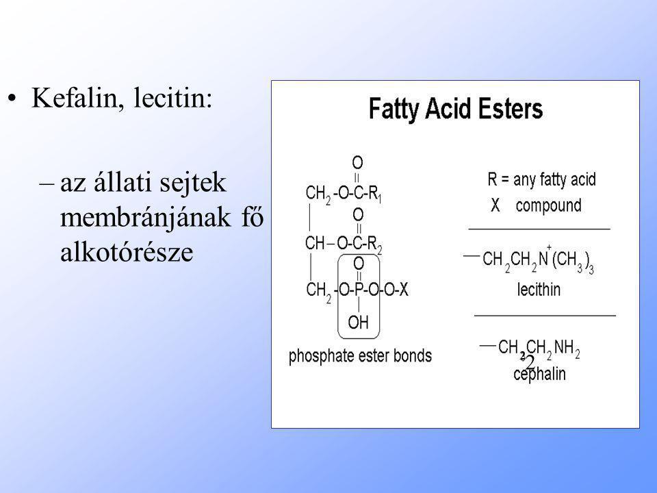 Kefalin, lecitin: –az állati sejtek membránjának fő alkotórésze 2 2