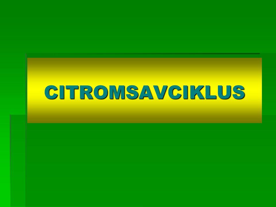 CITROMSAVCIKLUS