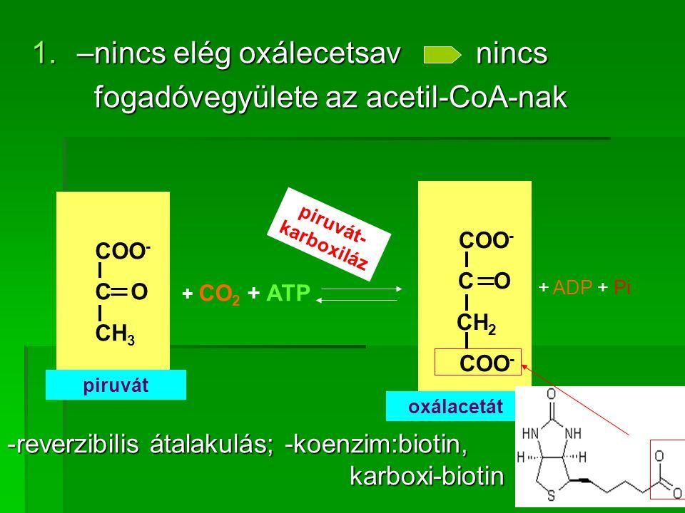 1.–nincs elég oxálecetsav nincs fogadóvegyülete az acetil-CoA-nak fogadóvegyülete az acetil-CoA-nak COO - C O CH 3 piruvát + CO 2 + ATP COO - C O CH 2