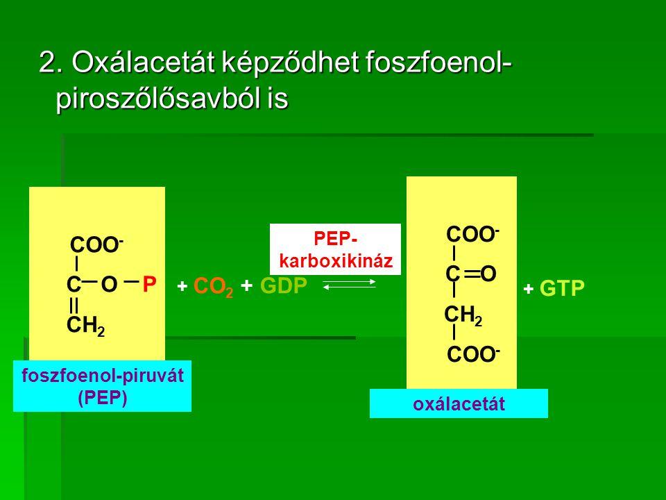 2. Oxálacetát képződhet foszfoenol- piroszőlősavból is 2. Oxálacetát képződhet foszfoenol- piroszőlősavból is COO - C O P CH 2 COO - C O CH 2 COO - +
