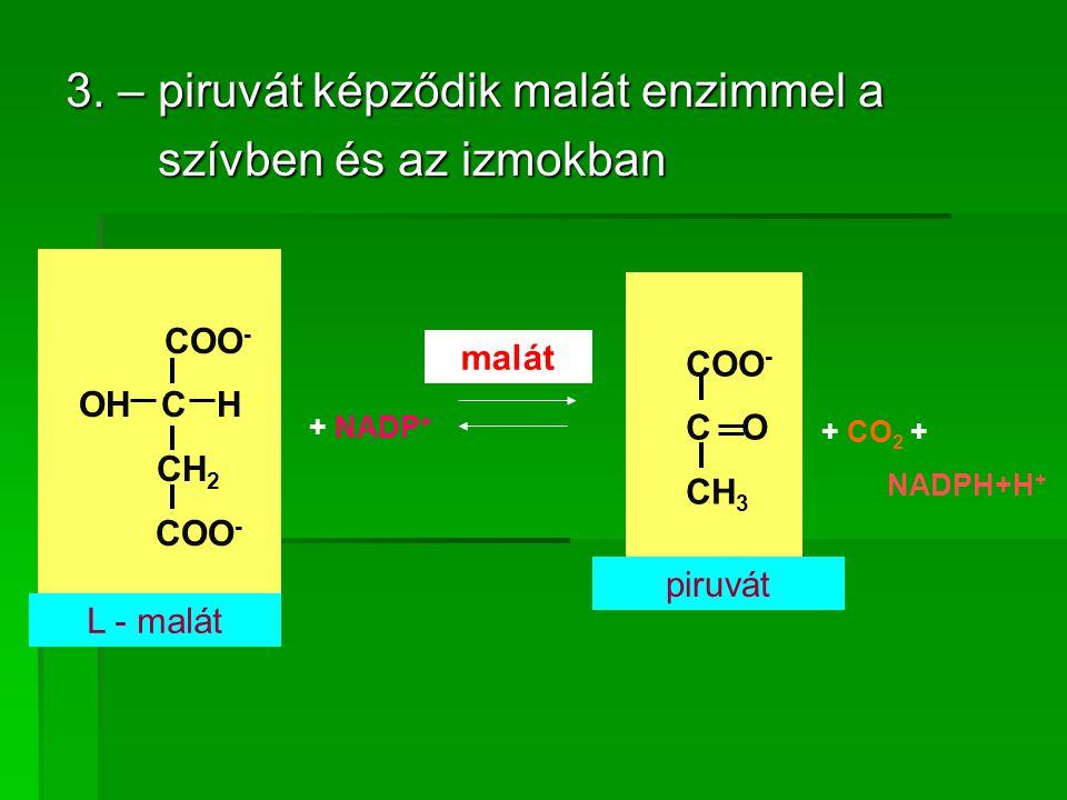 3. – piruvát képződik malát enzimmel a szívben és az izmokban szívben és az izmokban COO - OH C H CH 2 COO - C O CH 3 L - malát piruvát + NADP + + CO