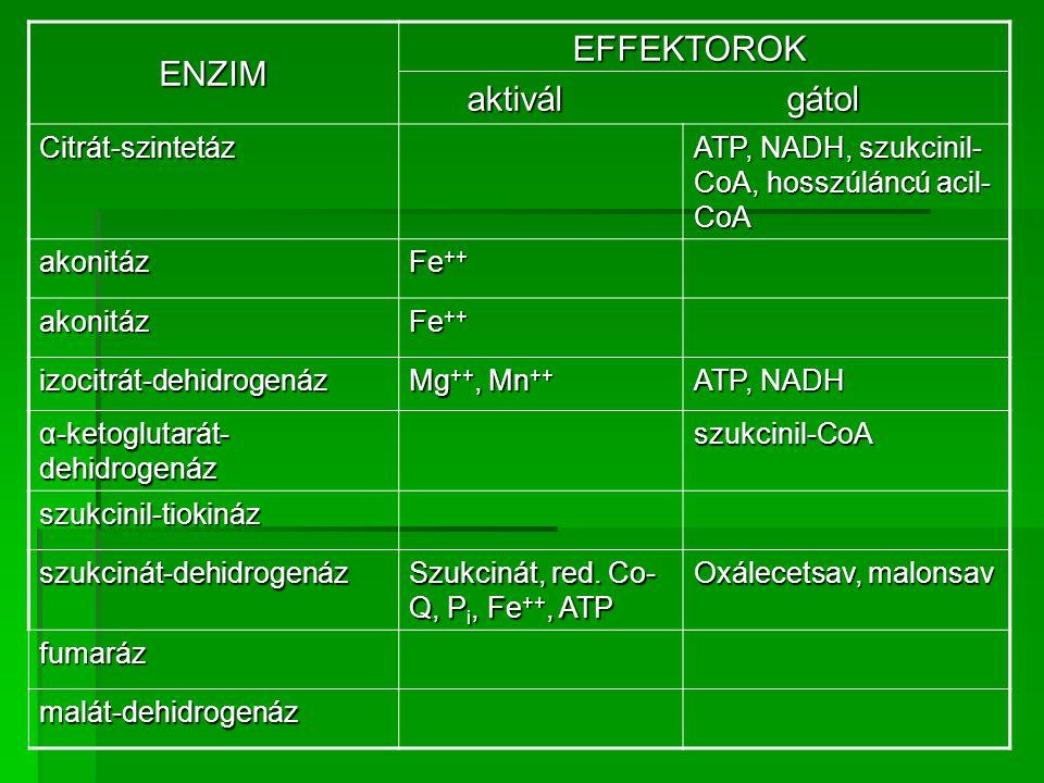 ENZIM EFFEKTOROK EFFEKTOROK aktivál gátol aktivál gátol Citrát-szintetáz ATP, NADH, szukcinil- CoA, hosszúláncú acil- CoA akonitáz Fe ++ akonitáz izoc