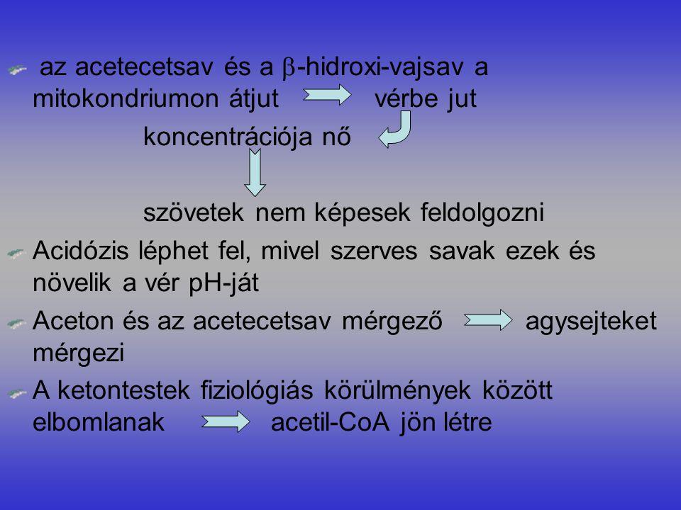 az acetecetsav és a  -hidroxi-vajsav a mitokondriumon átjut vérbe jut koncentrációja nő szövetek nem képesek feldolgozni Acidózis léphet fel, mivel szerves savak ezek és növelik a vér pH-ját Aceton és az acetecetsav mérgező agysejteket mérgezi A ketontestek fiziológiás körülmények között elbomlanak acetil-CoA jön létre